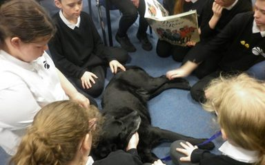Hector the Pat Dog update